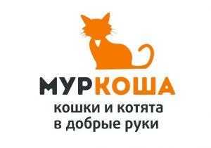 частный приют для кошек муркоша